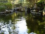 Lago do jardim japonês